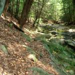 """Catoctin Creek, The Path Less Followed"" by LivingGaia"