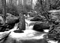 Small Fall Ramsey Prong Black and White