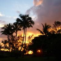 Papeete Palms Art Prints & Posters by Jody Hagler