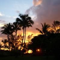 Papeete Palms Art Prints & Posters by Jody Hagler