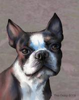 BostonTerrierIK