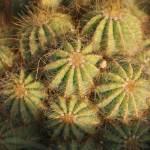 """Cactus"" by spadoodle"