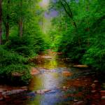"""""""Enchanted Forest"""" by dlennis"""