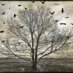 """The Last Winter Tree"" by MisturPhotography"