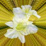 """""""Gilding the lillies"""" by allcarrots"""