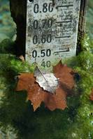 Gauge with Leaves