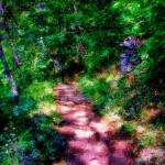 """The Mottled Trail"" by dlennis"