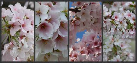 Cherry Blossom Collage