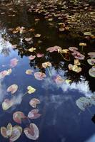 Lilly Pads_0835