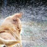 """""""Shake It Off"""" by jay1blue"""