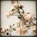"""""""Blooms."""" by PoetryandHums"""