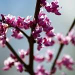 """No Spring Skips Its Turn"" by PoetryandHums"