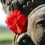 """BALI TREASURES - Simple Beauty"" by moderatefanatic"