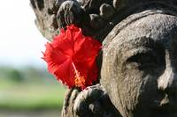 BALI TREASURES - Simple Beauty