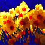 """Deliriously Happy Daffodils"" by luv4pix"