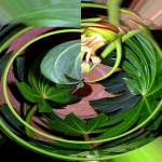 """""""A Bowl of Floating Leaves"""" by DBGCreations"""