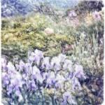"""""""Iris Garden"""" by judystalus"""