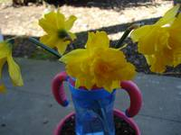 Daffodils and A Sippy Cup (2)