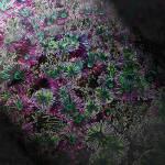 """flowers in moonlight"" by Cindisart"