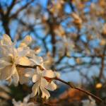 """""""Spring Arrival"""" by pixeldustfilms"""