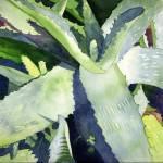 """""""Aloe"""" by art4fish"""