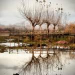 """Simetry"" by PauloGomes"