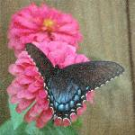 """Butterfly Beauty"" by faithfulheart"