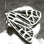 """virgin tiger moth 3"" by faithfulheart"