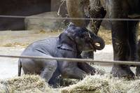 Baby Beco Plays at the Columbus Zoo
