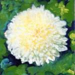 """White Chrysanthemum by RD Riccoboni"" by BeaconArtWorksCorporation"