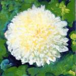 """White Chrysanthemum by RD Riccoboni"" by BeaconArtWorksCorporation"