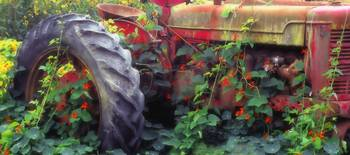 Tractor and flowers