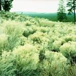 """landscape"" by scmtngirl"