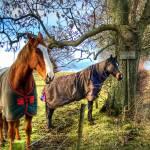 """Horses"" by JimMonan"