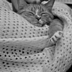 """Comfy"" by bluepool"