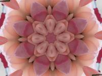 Pinks Kaleidoscope Art 1