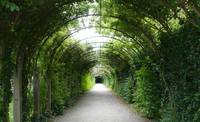 Green Arbor from Sound of Music