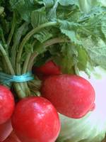 Bunch of Red Radishes Vertical View