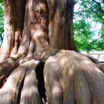 """""""La Mujer del Árbol - Woman tree"""" by felixayala"""