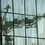 """""""Glass Crane 148"""" by tomwachtel"""