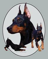 Doberman Pinscher - Life Stages
