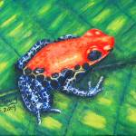"""Red-Backed Poison Frog"" by laughingface2"