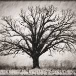 """Burr Oak 12.16.2008"" by notleyhawkins"