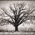 """""""Burr Oak 12.16.2008"""" by notleyhawkins"""