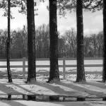 """""""treeline"""" by dtacker"""