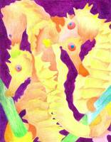 Yellow Seahorses