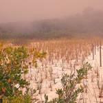 """""""The Fog Rolls In"""" by shelshots"""