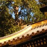 """Golden Roof Green Trees"" by BrendanArthurRing"