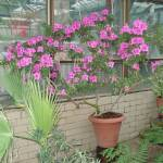 """Botanical garden. Greenhouse."" by pivlabo"