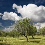 """""""Almendros y nubes"""" by Alpesebre"""